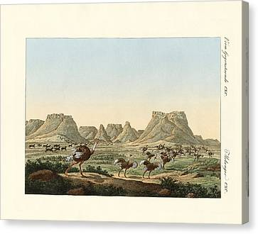 Area In South Africa At The Forland Of Good Hope Canvas Print