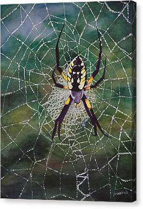 Argiope Web Canvas Print