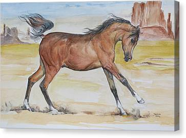 Equine Art Canvas Print - Arizona Baby by Janina  Suuronen