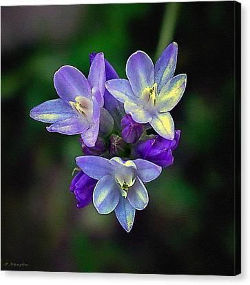 Nadine Canvas Print - Arizona Bluedick Wildflower by Bob and Nadine Johnston