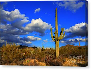 Arizona Landscape 2 Canvas Print by Bob Christopher