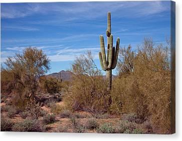 Carefree Arizona Canvas Print - Arizona Landscape by David Patterson