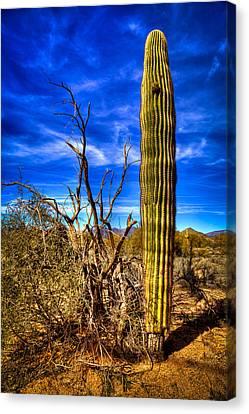 Arizona Landscape IIi Canvas Print by David Patterson