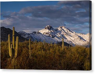 Arizona Mountains In Snow Canvas Print by Rob Travis