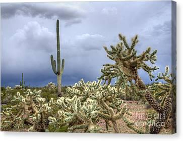 Arizona Sonora Desert Landscape 1 Canvas Print