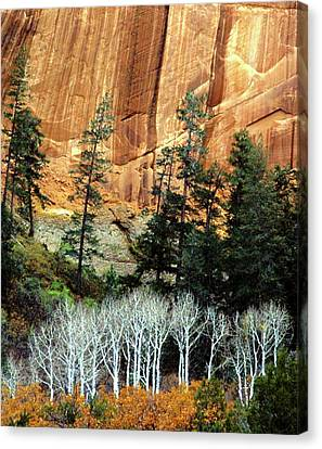 Arizona's Betatkin Aspens Canvas Print by Ed  Riche