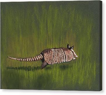 Armadillo Run Canvas Print