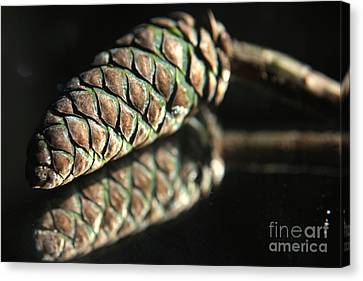 Armored Pine Cone Canvas Print