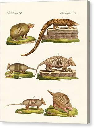 Armoured Animals Canvas Print