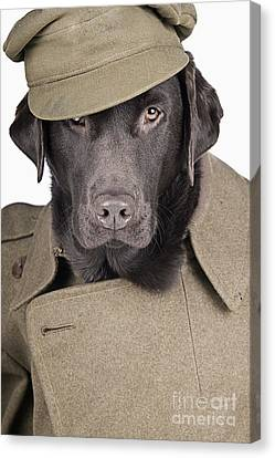 Army Dog Canvas Print by Justin Paget