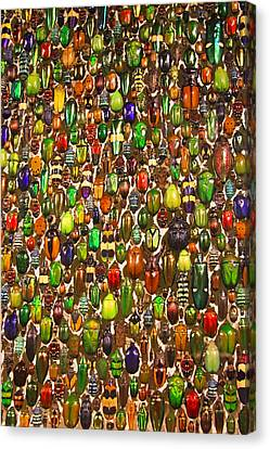 Army Of Beetles And Bugs Canvas Print