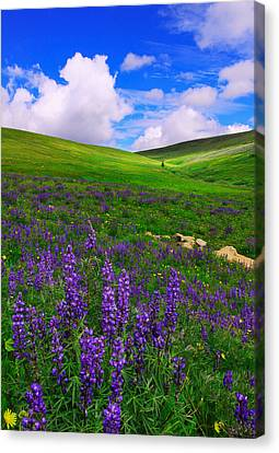 Canvas Print featuring the photograph Aroma Of Summer by Kadek Susanto