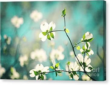 Arouse Canvas Print by Kim Fearheiley