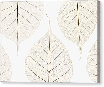 Arranged Leaves Canvas Print by Kelly Redinger