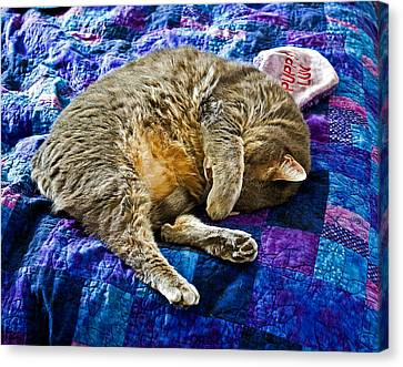 Cat Nap Canvas Print by Tim Buisman