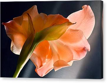 Art Of Gladiolus. Canvas Print by Terence Davis