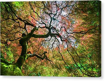 Arterial Tree Canvas Print