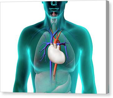 Artificial Heart Canvas Print by Claus Lunau