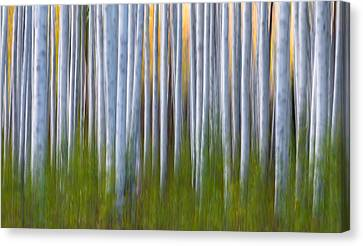 Artistic Aspens 2 Canvas Print by Larry Marshall