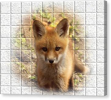 Fox Kit Canvas Print - Artistic Cute Kit Fox by Thomas Young