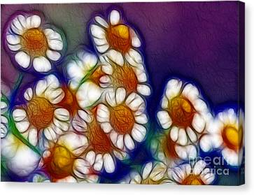 Artistic Feverfew Canvas Print by Kaye Menner