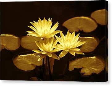 Artistic Gold Tone Water Lilies Canvas Print by Linda Phelps