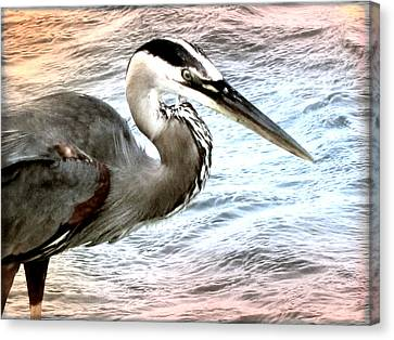 Artistic Great Blue Heron Canvas Print