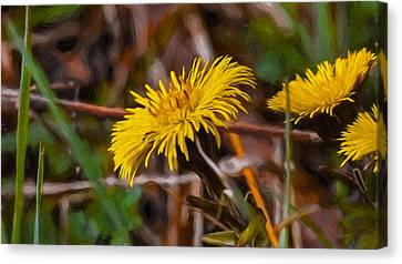 Artistic Painterly Tussilago Farfara Sign Of Spring. Canvas Print by Leif Sohlman