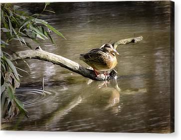 Artistic Paintiry Female Mallard Duck Sitting On A Log Near And Reflected In Water Canvas Print
