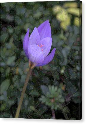 Canvas Print featuring the photograph Purple Flower by John Freidenberg