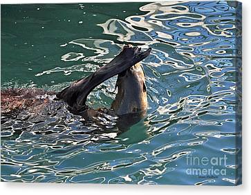 Artsy Sea Lion Canvas Print