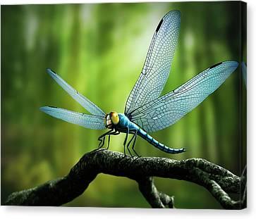 Meganeura Canvas Print - Artwork Of Giant Dragonfly Meganeura by Mark Garlick