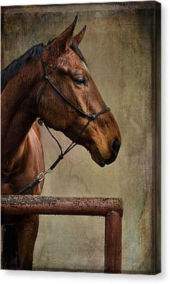 Arty Canvas Print by Barbara Manis