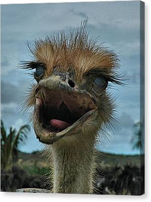 Aruba Ostrich Farm Canvas Print