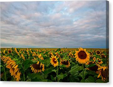Canvas Print featuring the photograph As Far As The Eye Can See by Ronda Kimbrow