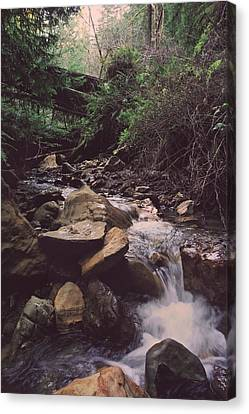 As Free As This Canvas Print by Laurie Search