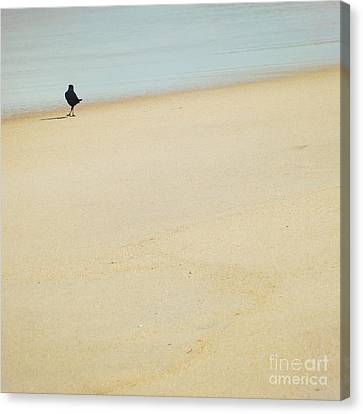 As I Wander Canvas Print by Sharon Coty
