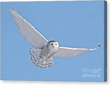 As My Spirit Soars Canvas Print by Heather King