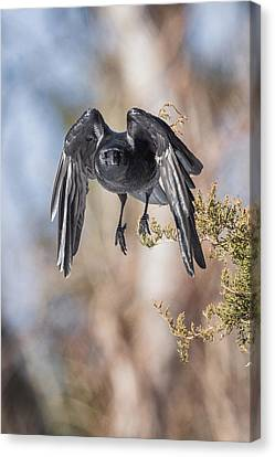 As The Crow Flies Canvas Print by Bill Wakeley