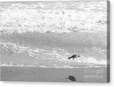 As  The Crow Flies Canvas Print by Artist and Photographer Laura Wrede
