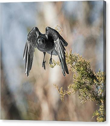 As The Crow Flies Square Canvas Print by Bill Wakeley