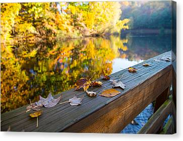 As The Leaves Fall Canvas Print by Karol Livote