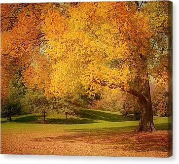 As The Leaves Fall Canvas Print by Kim Hojnacki