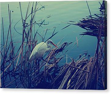 Cattail Canvas Print - As The Light Fades by Laurie Search