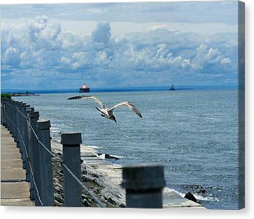As The Seagull Flies Canvas Print by Gothicrow Images