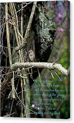 As The Sparrow  Canvas Print