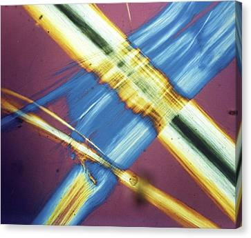 Asbestos Canvas Print - Asbestos Fibres by Crown Copyright/health & Safety Laboratory Science Photo Library