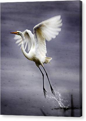 Ascension Canvas Print by Alan Raasch