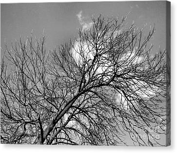 Canvas Print featuring the photograph Ash And Light by Robyn King