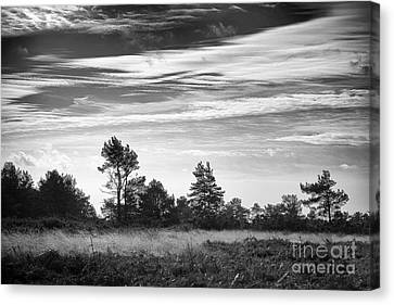 Ashdown Forest In Black And White Canvas Print by Natalie Kinnear